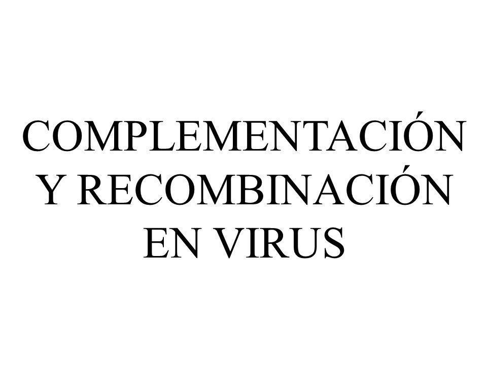 COMPLEMENTACIÓN Y RECOMBINACIÓN EN VIRUS