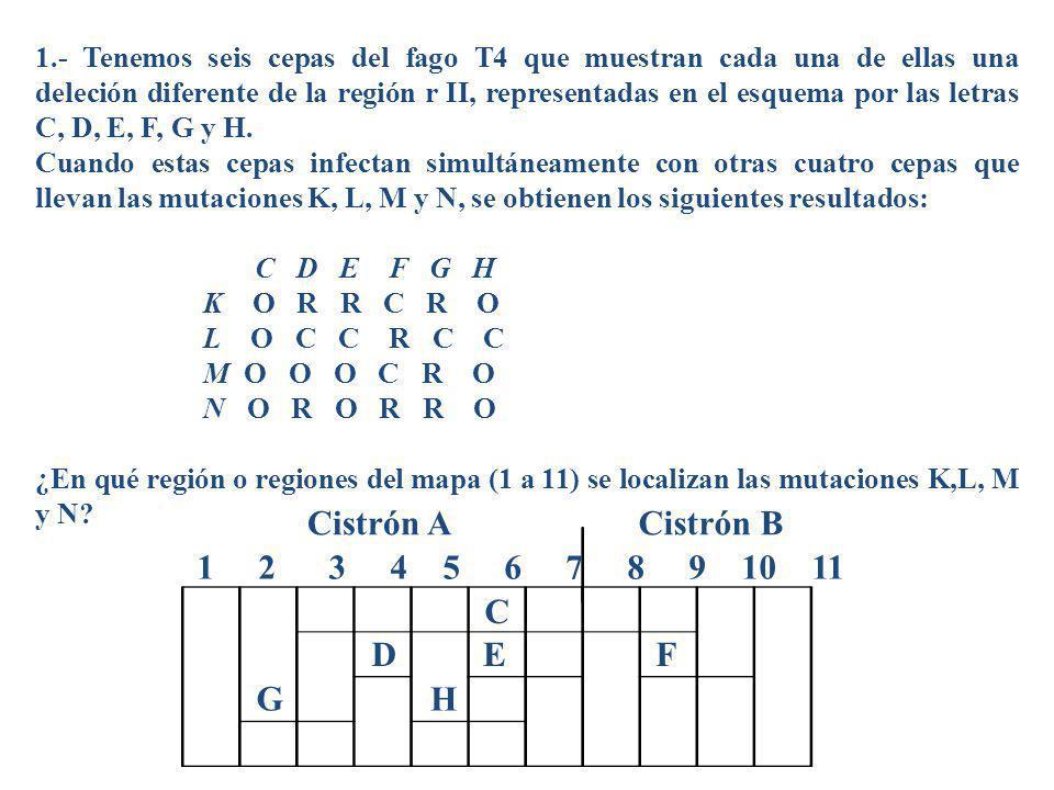 1.- Tenemos seis cepas del fago T4 que muestran cada una de ellas una deleción diferente de la región r II, representadas en el esquema por las letras