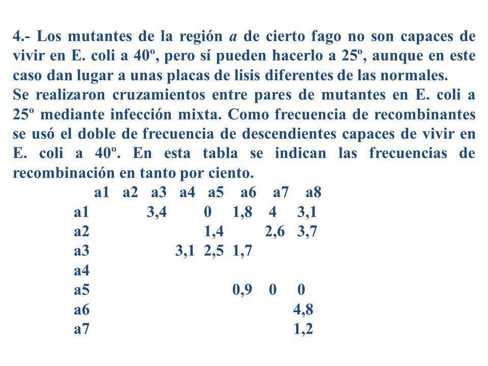 4.- Los mutantes de la región a de cierto fago no son capaces de vivir en E. coli a 40º, pero sí pueden hacerlo a 25º, aunque en este caso dan lugar a