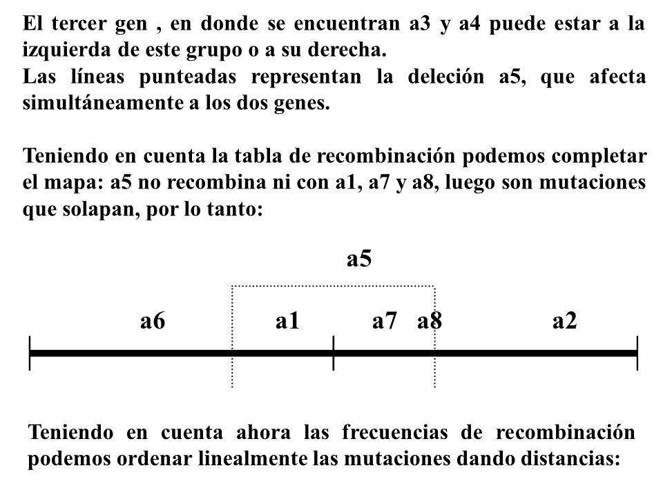 El tercer gen, en donde se encuentran a3 y a4 puede estar a la izquierda de este grupo o a su derecha. Las líneas punteadas representan la deleción a5