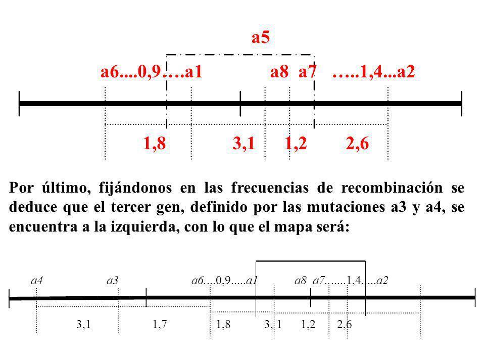 a5 a6....0,9….a1 a8 a7 …..1,4...a2 1,8 3,1 1,2 2,6 a4 a3 a6....0,9.....a1 a8 a7.......1,4.....a2 3,1 1,7 1,8 3, 1 1,2 2,6 Por último, fijándonos en la