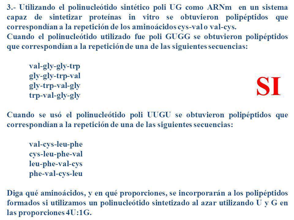 3.- Utilizando el polinucleótido sintético poli UG como ARNm en un sistema capaz de sintetizar proteínas in vitro se obtuvieron polipéptidos que corre