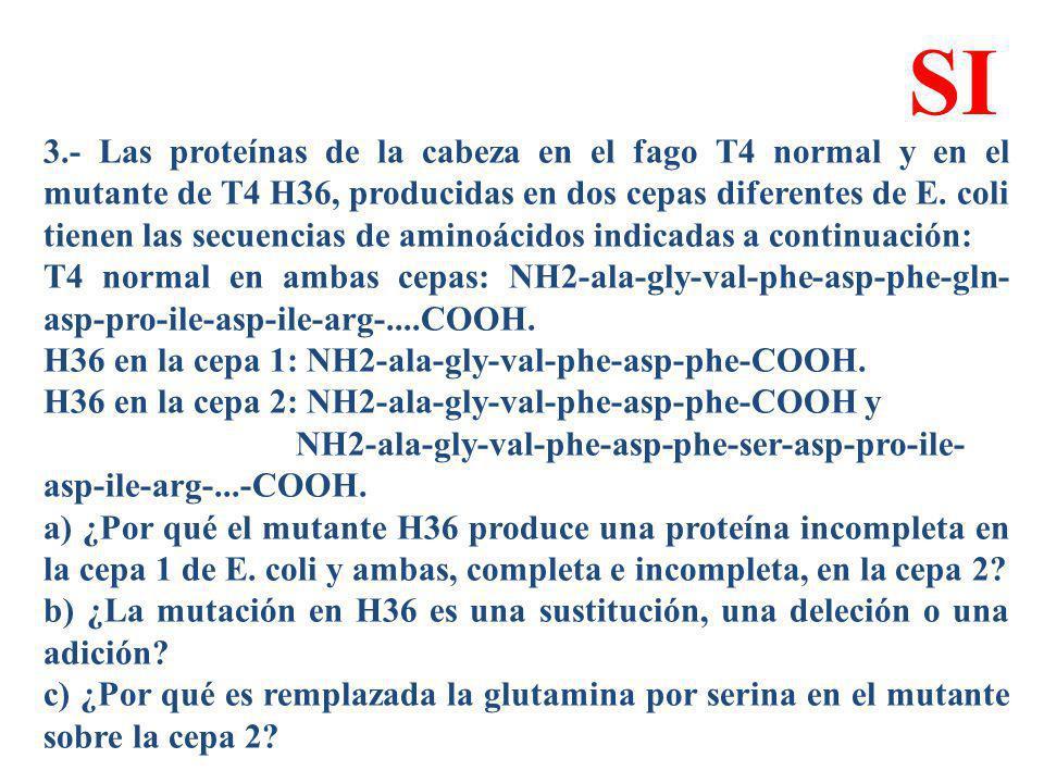 3.- Las proteínas de la cabeza en el fago T4 normal y en el mutante de T4 H36, producidas en dos cepas diferentes de E. coli tienen las secuencias de