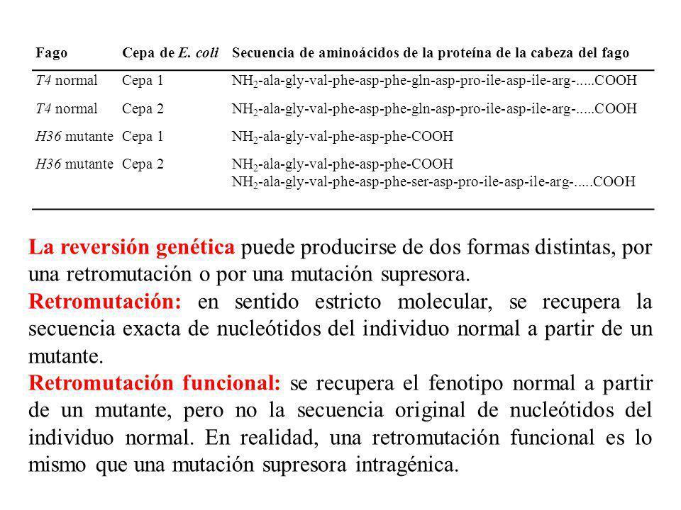 FagoCepa de E. coliSecuencia de aminoácidos de la proteína de la cabeza del fago T4 normalCepa 1NH 2 -ala-gly-val-phe-asp-phe-gln-asp-pro-ile-asp-ile-