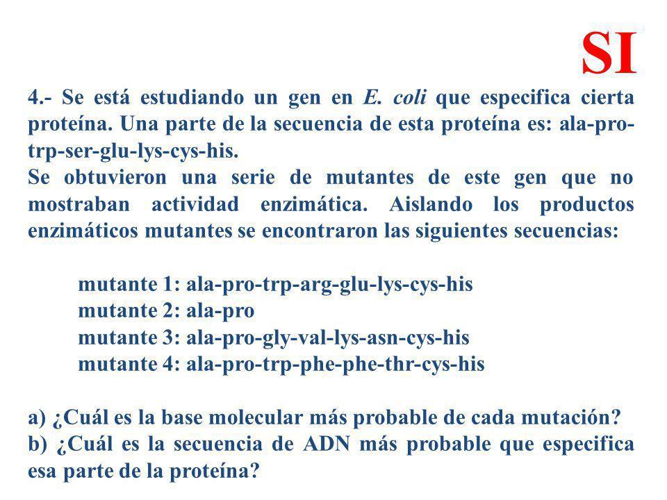 4.- Se está estudiando un gen en E. coli que especifica cierta proteína. Una parte de la secuencia de esta proteína es: ala-pro- trp-ser-glu-lys-cys-h