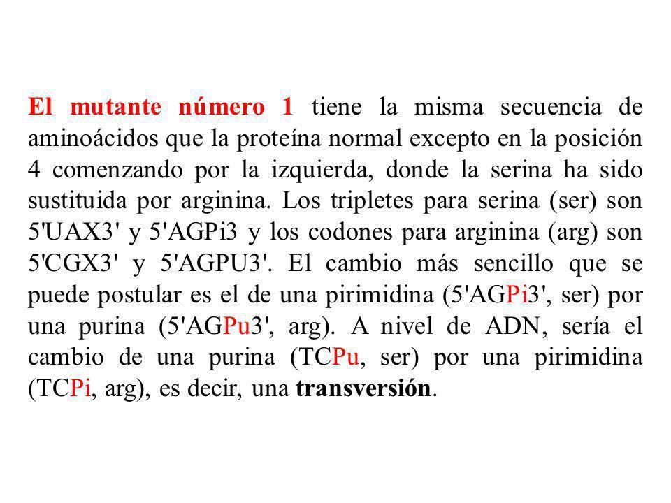 El mutante número 1 tiene la misma secuencia de aminoácidos que la proteína normal excepto en la posición 4 comenzando por la izquierda, donde la seri