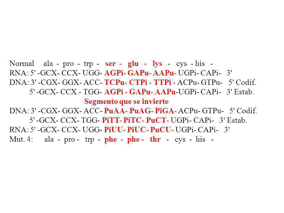 Normal ala - pro - trp - ser - glu - lys - cys - his - RNA: 5' -GCX- CCX- UGG- AGPi- GAPu- AAPu- UGPi- CAPi- 3' DNA: 3' -CGX- GGX- ACC- TCPu- CTPi - T