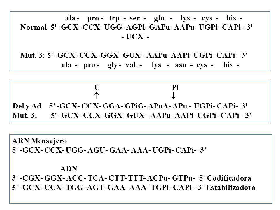 ala - pro - trp - ser - glu - lys - cys - his - Normal: 5' -GCX- CCX- UGG- AGPi- GAPu- AAPu- UGPi- CAPi- 3' - UCX - Mut. 3: 5' -GCX- CCX- GGX- GUX- AA