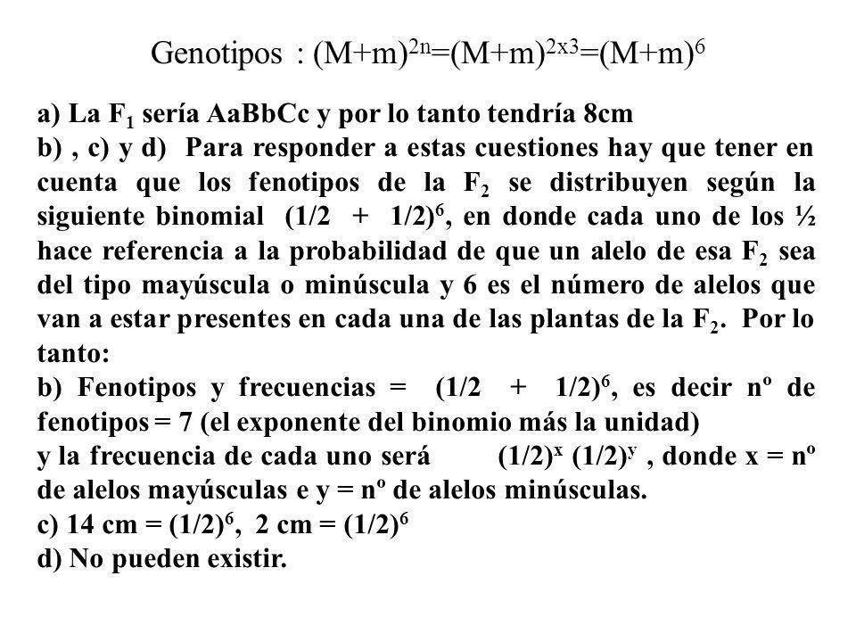 a) La F 1 sería AaBbCc y por lo tanto tendría 8cm b), c) y d) Para responder a estas cuestiones hay que tener en cuenta que los fenotipos de la F 2 se