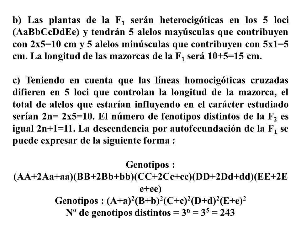 b) Las plantas de la F 1 serán heterocigóticas en los 5 loci (AaBbCcDdEe) y tendrán 5 alelos mayúsculas que contribuyen con 2x5=10 cm y 5 alelos minús
