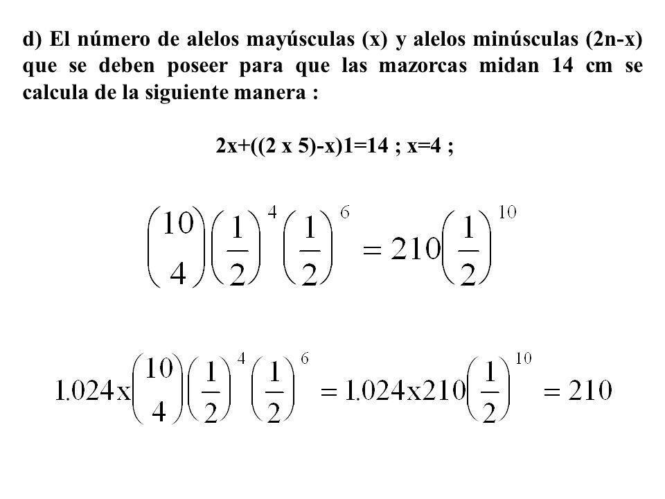 d) El número de alelos mayúsculas (x) y alelos minúsculas (2n-x) que se deben poseer para que las mazorcas midan 14 cm se calcula de la siguiente mane