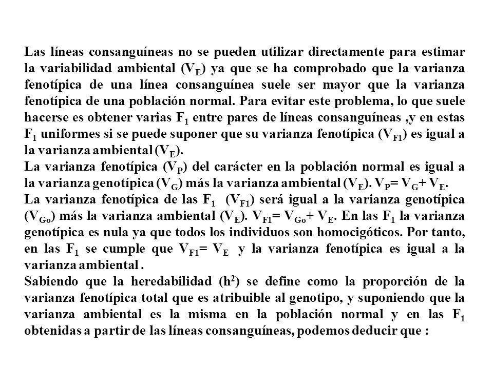 Las líneas consanguíneas no se pueden utilizar directamente para estimar la variabilidad ambiental (V E ) ya que se ha comprobado que la varianza feno