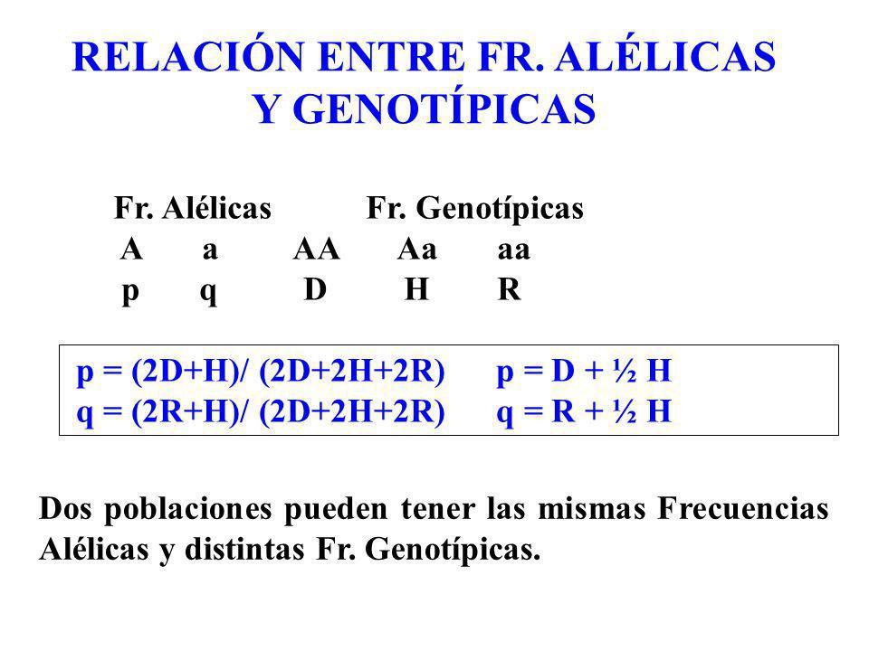 RELACIÓN ENTRE FR. ALÉLICAS Y GENOTÍPICAS p = (2D+H)/ (2D+2H+2R) p = D + ½ H q = (2R+H)/ (2D+2H+2R) q = R + ½ H Fr. Alélicas Fr. Genotípicas A a AA Aa