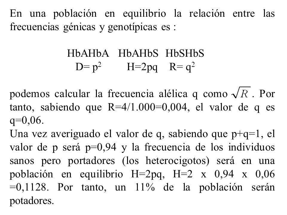 En una población en equilibrio la relación entre las frecuencias génicas y genotípicas es : HbAHbA HbAHbS HbSHbS D= p 2 H=2pq R= q 2 podemos calcular
