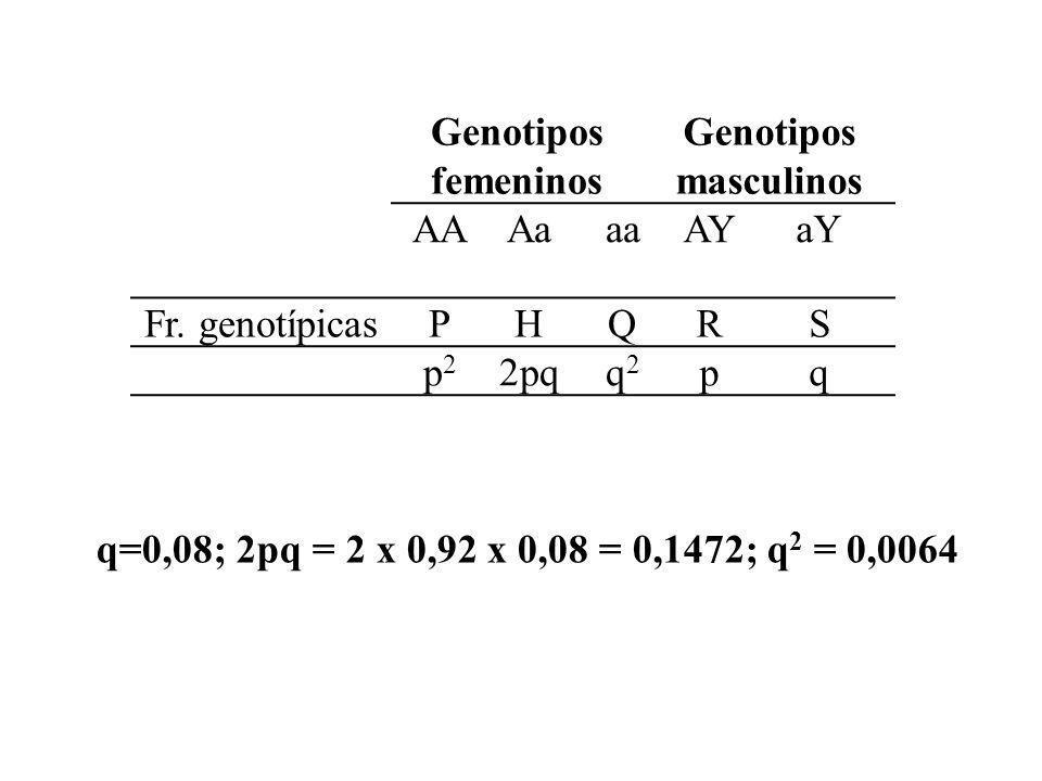Genotipos femeninos Genotipos masculinos AAAaaaAYaY Fr. genotípicasPHQRS p2p2 2pqq2q2 pq q=0,08; 2pq = 2 x 0,92 x 0,08 = 0,1472; q 2 = 0,0064