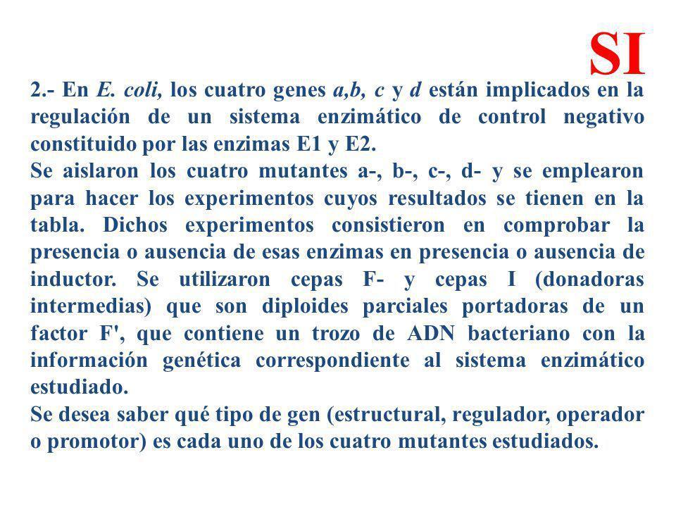 2.- En E. coli, los cuatro genes a,b, c y d están implicados en la regulación de un sistema enzimático de control negativo constituido por las enzimas
