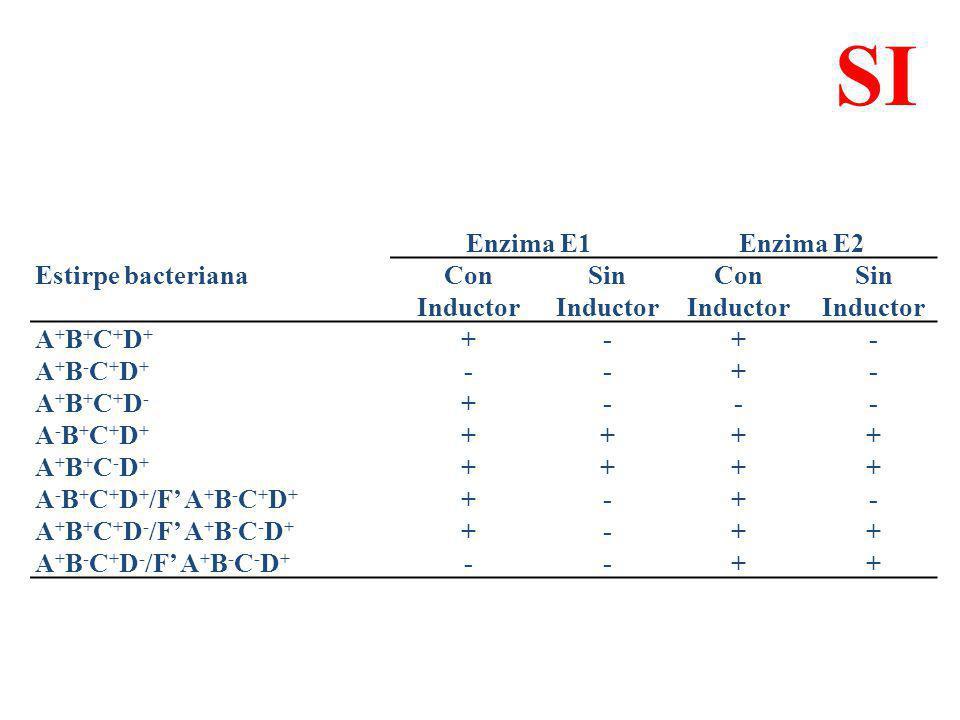 Enzima E1Enzima E2 Estirpe bacterianaCon Inductor Sin Inductor Con Inductor Sin Inductor A+B+C+D+A+B+C+D+ +-+- A+B-C+D+A+B-C+D+ --+- A+B+C+D-A+B+C+D-