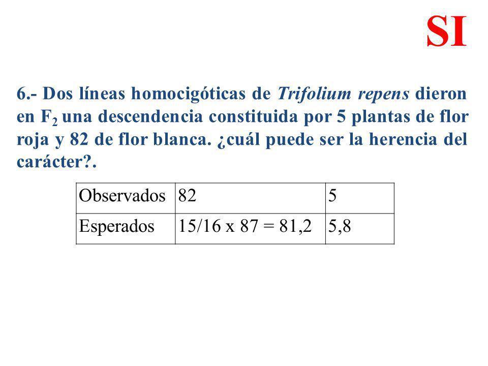 6.- Dos líneas homocigóticas de Trifolium repens dieron en F 2 una descendencia constituida por 5 plantas de flor roja y 82 de flor blanca. ¿cuál pued