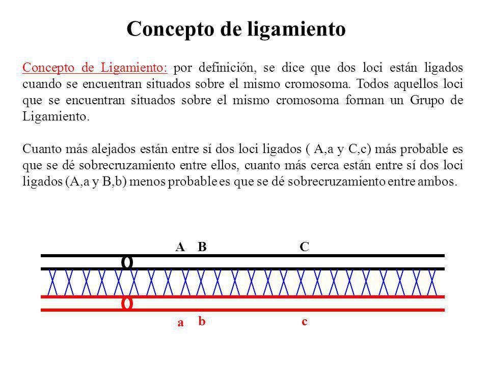 A BC a bc Concepto de ligamiento Concepto de Ligamiento: por definición, se dice que dos loci están ligados cuando se encuentran situados sobre el mis