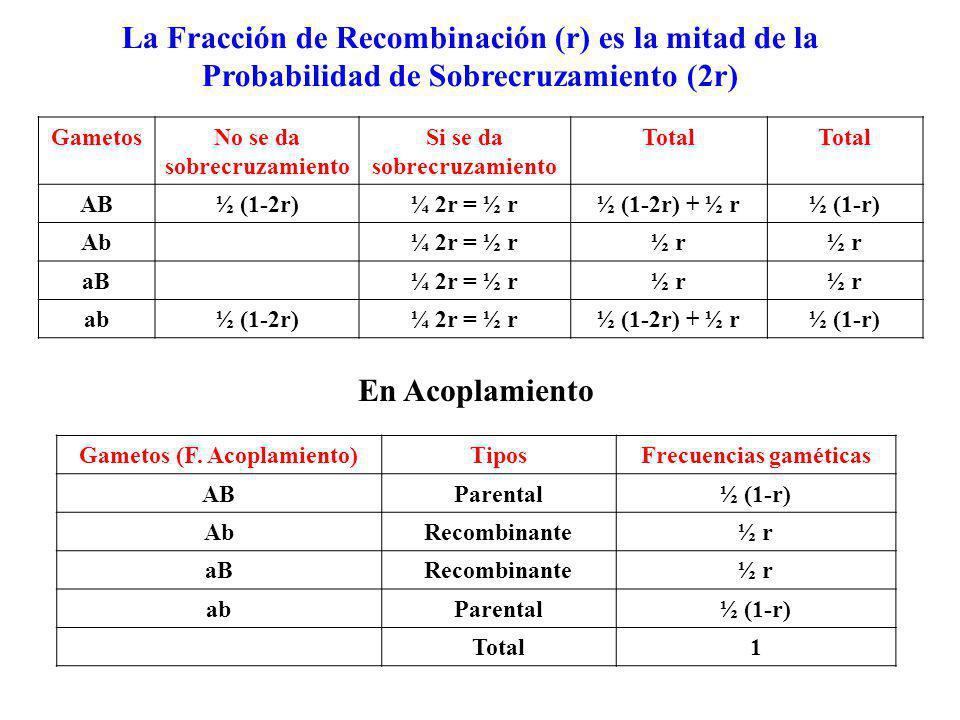 GametosNo se da sobrecruzamiento Si se da sobrecruzamiento Total AB½ (1-2r)¼ 2r = ½ r½ (1-2r) + ½ r½ (1-r) Ab¼ 2r = ½ r½ r aB¼ 2r = ½ r½ r ab½ (1-2r)¼