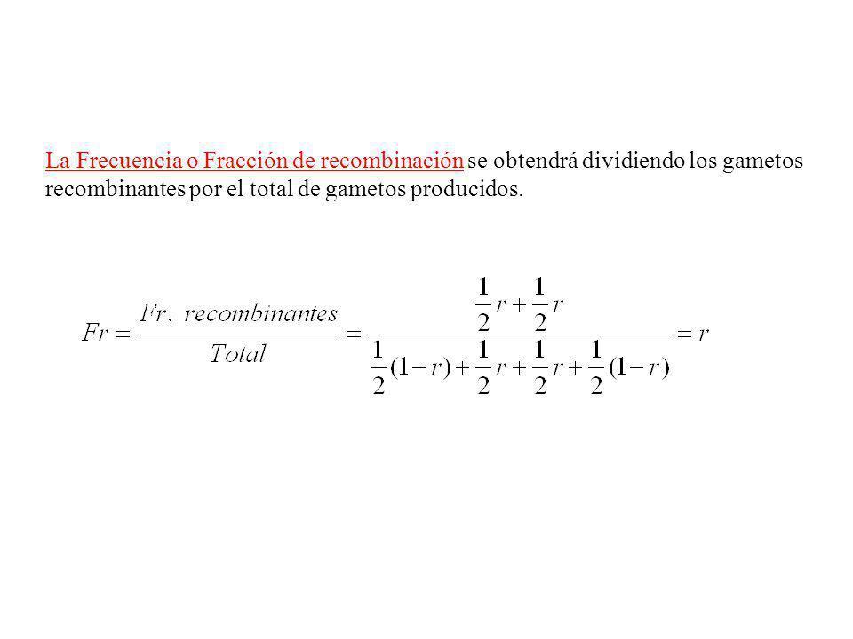 La Frecuencia o Fracción de recombinación se obtendrá dividiendo los gametos recombinantes por el total de gametos producidos.