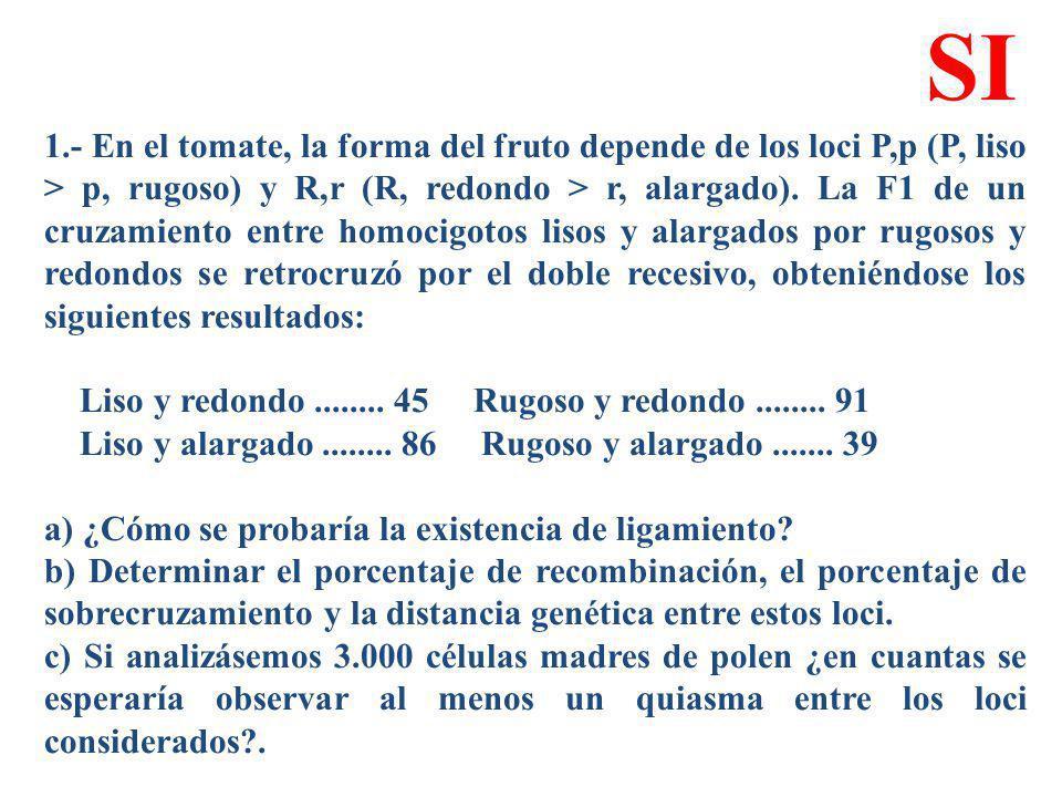 1.- En el tomate, la forma del fruto depende de los loci P,p (P, liso > p, rugoso) y R,r (R, redondo > r, alargado). La F1 de un cruzamiento entre hom