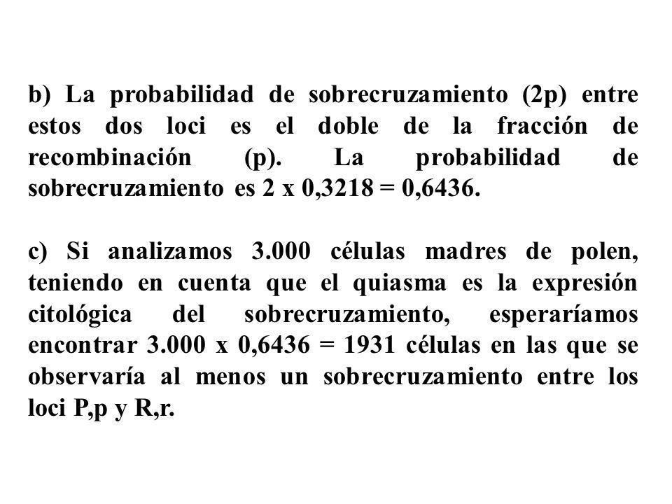 b) La probabilidad de sobrecruzamiento (2p) entre estos dos loci es el doble de la fracción de recombinación (p). La probabilidad de sobrecruzamiento