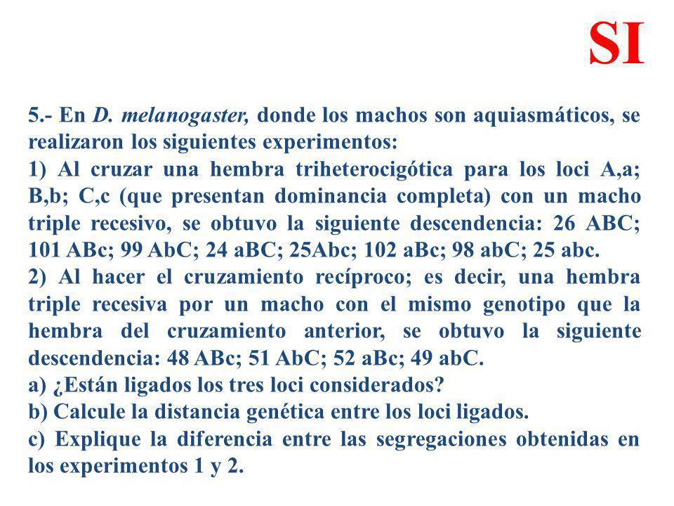 5.- En D. melanogaster, donde los machos son aquiasmáticos, se realizaron los siguientes experimentos: 1) Al cruzar una hembra triheterocigótica para