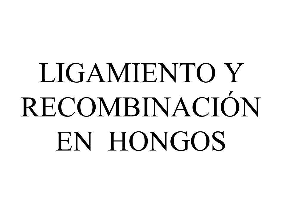 LIGAMIENTO Y RECOMBINACIÓN EN HONGOS