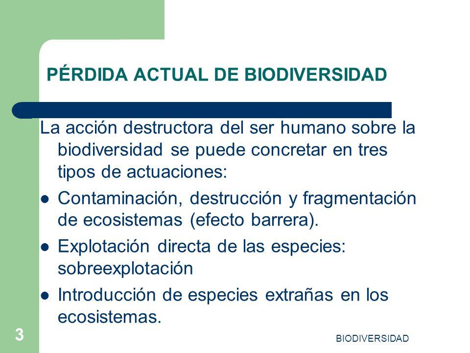 BIODIVERSIDAD 3 PÉRDIDA ACTUAL DE BIODIVERSIDAD La acción destructora del ser humano sobre la biodiversidad se puede concretar en tres tipos de actuac