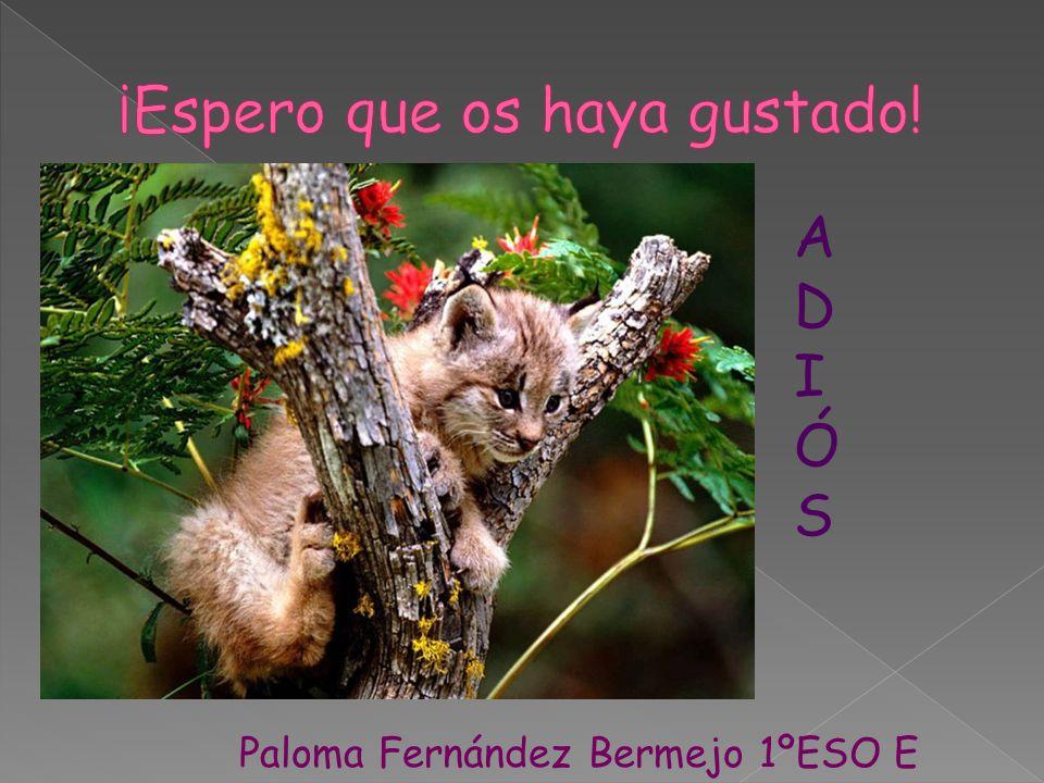 ADIÓSADIÓS Paloma Fernández Bermejo 1ºESO E