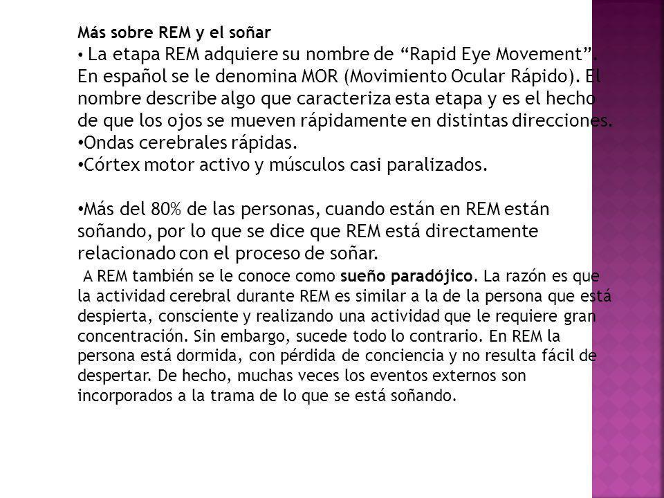 Más sobre REM y el soñar La etapa REM adquiere su nombre de Rapid Eye Movement. En español se le denomina MOR (Movimiento Ocular Rápido). El nombre de