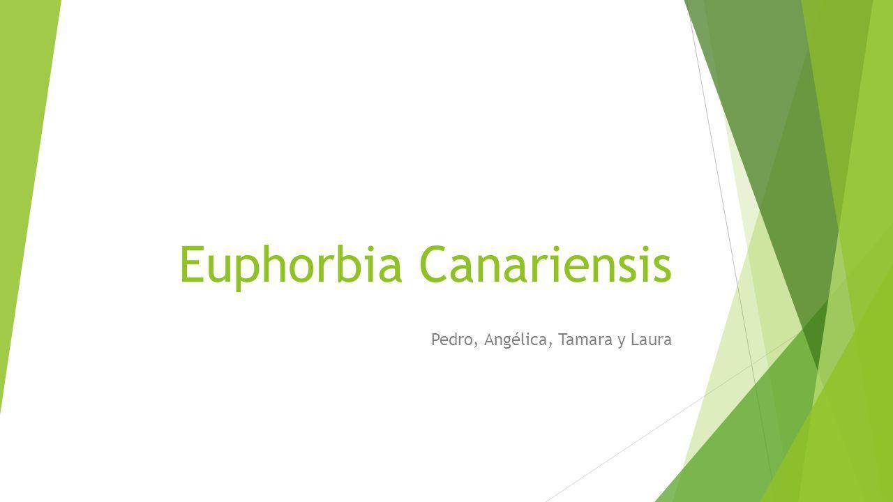 Euphorbia Canariensis Pedro, Angélica, Tamara y Laura