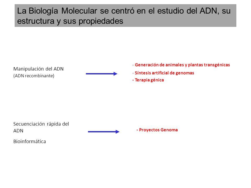 Manipulación del ADN (ADN recombinante) - Generación de animales y plantas transgénicas - Síntesis artificial de genomas - Terapia génica Secuenciació