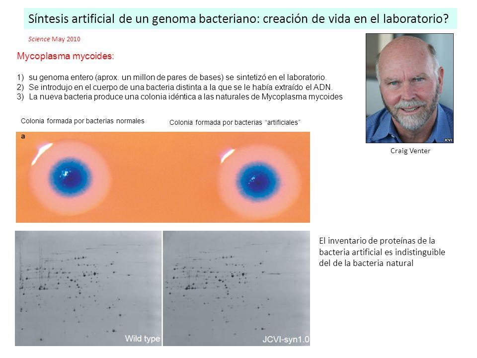 Síntesis artificial de un genoma bacteriano: creación de vida en el laboratorio? Colonia formada por bacterias normales Colonia formada por bacterias