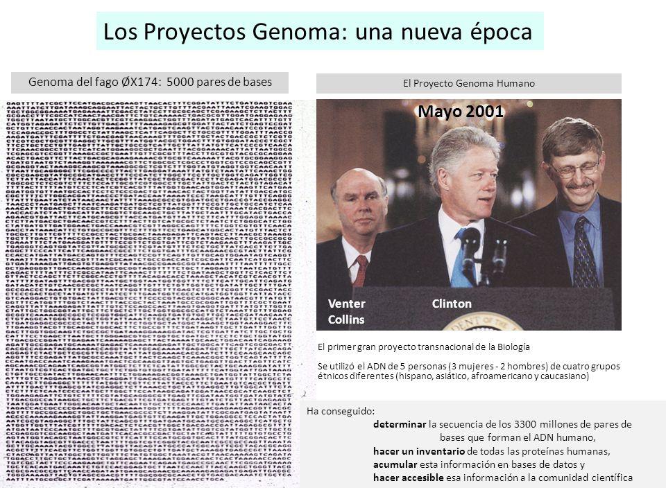 Los Proyectos Genoma: una nueva época Venter Clinton Collins Mayo 2001 El Proyecto Genoma Humano El primer gran proyecto transnacional de la Biología