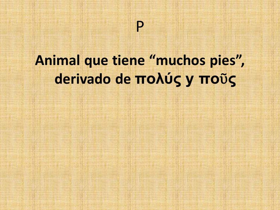 P Animal que tiene muchos pies, derivado de πολύς y πο ς