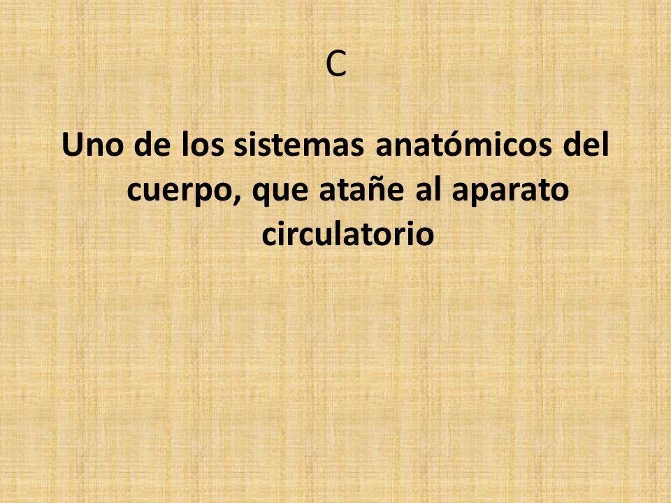 C Uno de los sistemas anatómicos del cuerpo, que atañe al aparato circulatorio