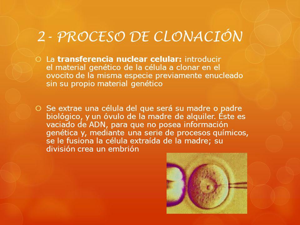 2- PROCESO DE CLONACIÓN La transferencia nuclear celular: introducir el material genético de la célula a clonar en el ovocito de la misma especie prev