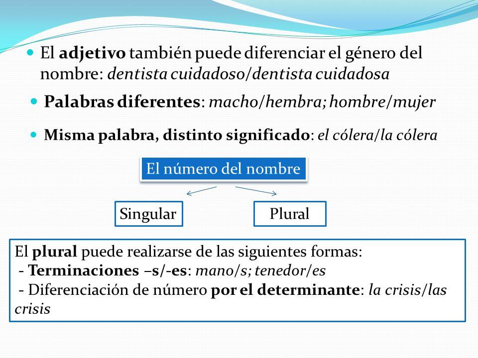 El adjetivo también puede diferenciar el género del nombre: dentista cuidadoso/dentista cuidadosa Palabras diferentes: macho/hembra; hombre/mujer Mism