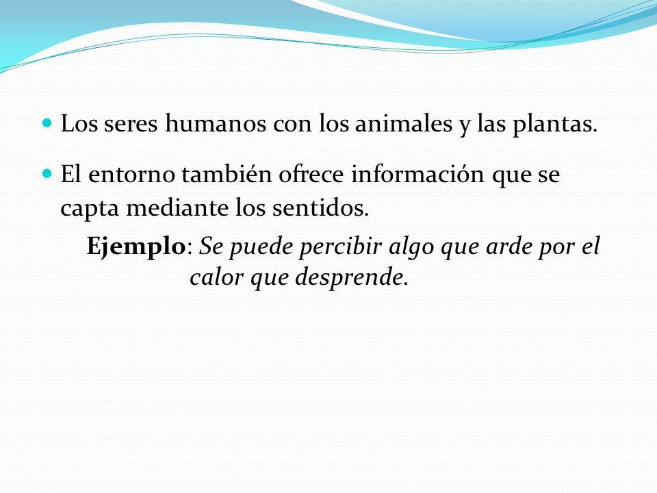 Los seres humanos con los animales y las plantas. El entorno también ofrece información que se capta mediante los sentidos. Ejemplo: Se puede percibir