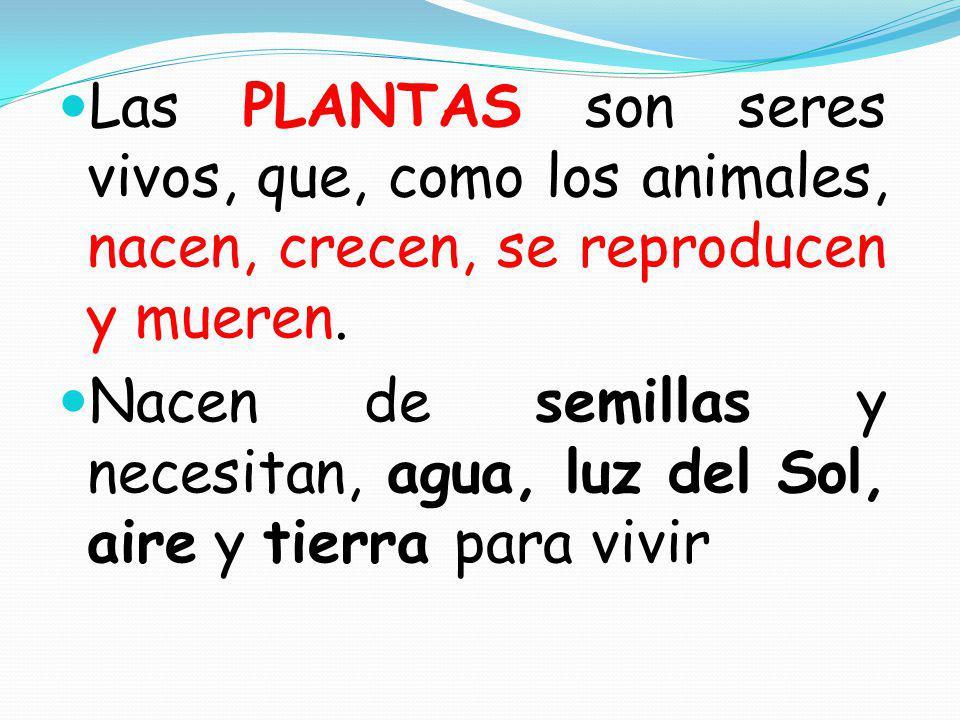 Las PLANTAS son seres vivos, que, como los animales, nacen, crecen, se reproducen y mueren.