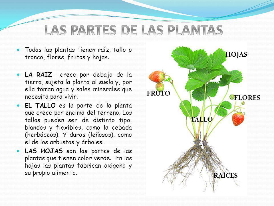 Todas las plantas tienen raíz, tallo o tronco, flores, frutos y hojas.
