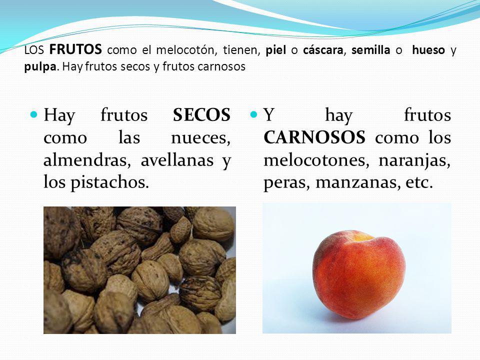 LOS FRUTOS como el melocotón, tienen, piel o cáscara, semilla o hueso y pulpa.