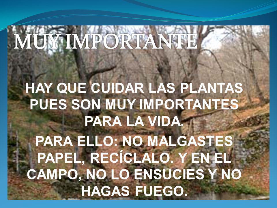 HAY QUE CUIDAR LAS PLANTAS PUES SON MUY IMPORTANTES PARA LA VIDA.