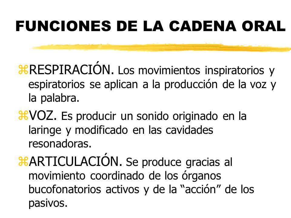 FUNCIONES DE LA CADENA ORAL zRESPIRACIÓN. Los movimientos inspiratorios y espiratorios se aplican a la producción de la voz y la palabra. zVOZ. Es pro