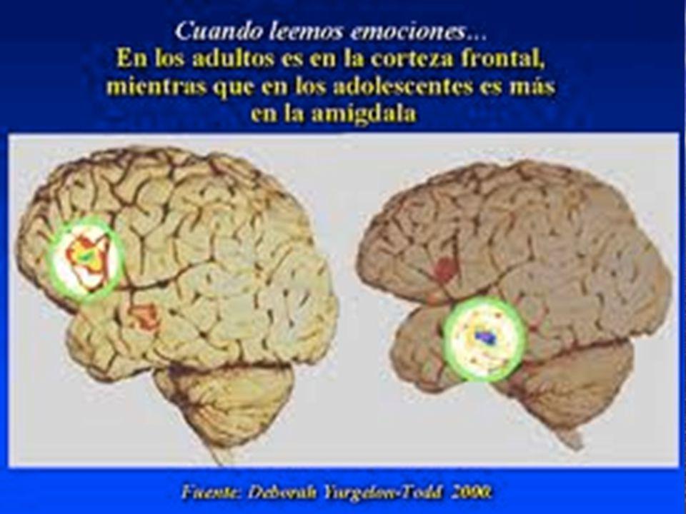 IMPLICACIONES NEUROBIOLÓGICAS NUCLEO ACUMBENS ( placer) AREA TEGMENTAL VENTRAL ( motivación) SEPTUM (emociones, miedo, agresión) AMIGDALA-HIPOCAMPO (m
