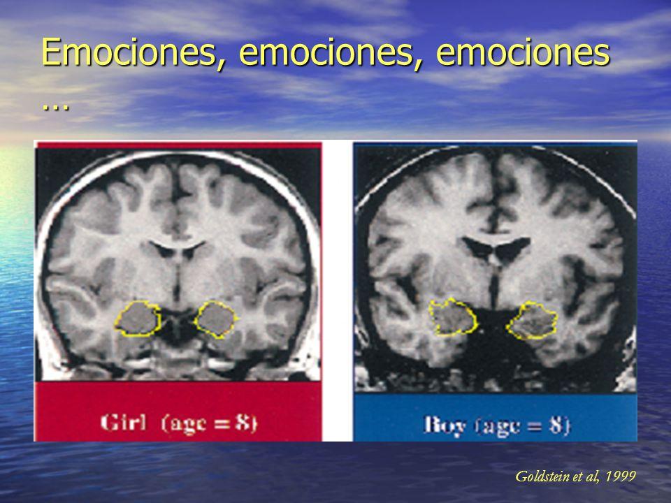 Conectividad interhemisférica Cuerpo calloso > Cuerpo calloso > X 30 X 30 Capacidades lingüísticas Capacidades lingüísticas Capacidades inteligencia e