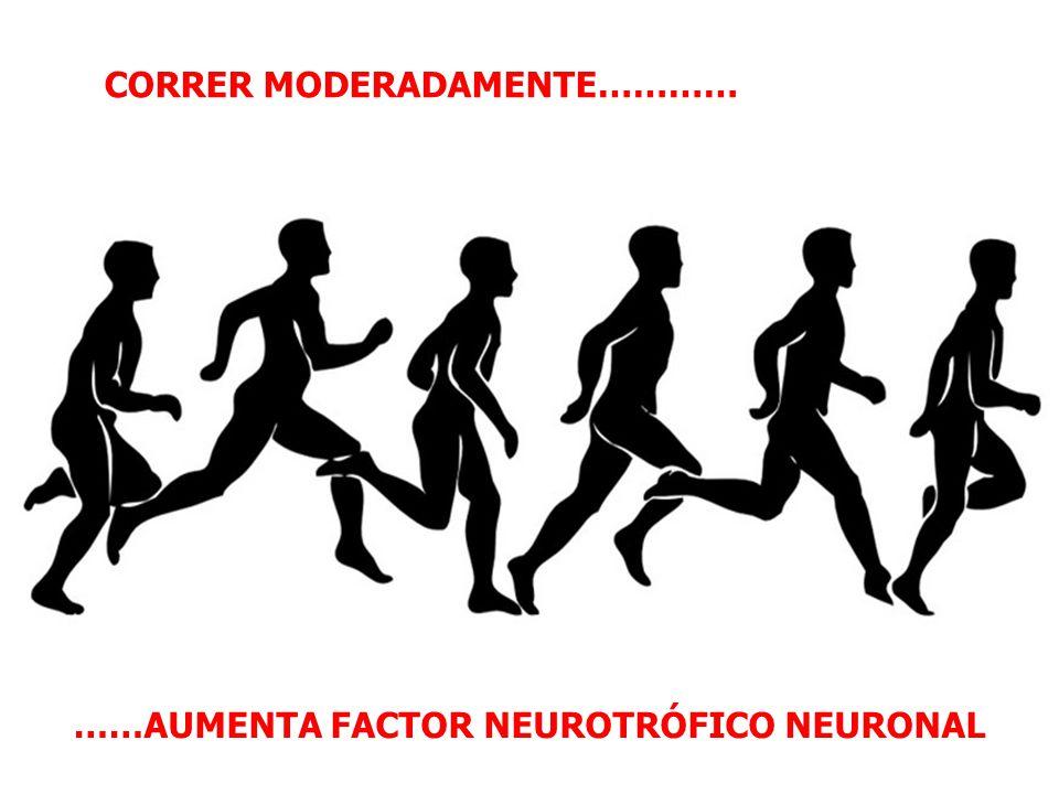 FAVORECER LA ACTIVIDAD FISICA El ejercicio posee efectos beneficiosos sobre la función cerebral, tales como promover la neuroplasticidad y aumentar el