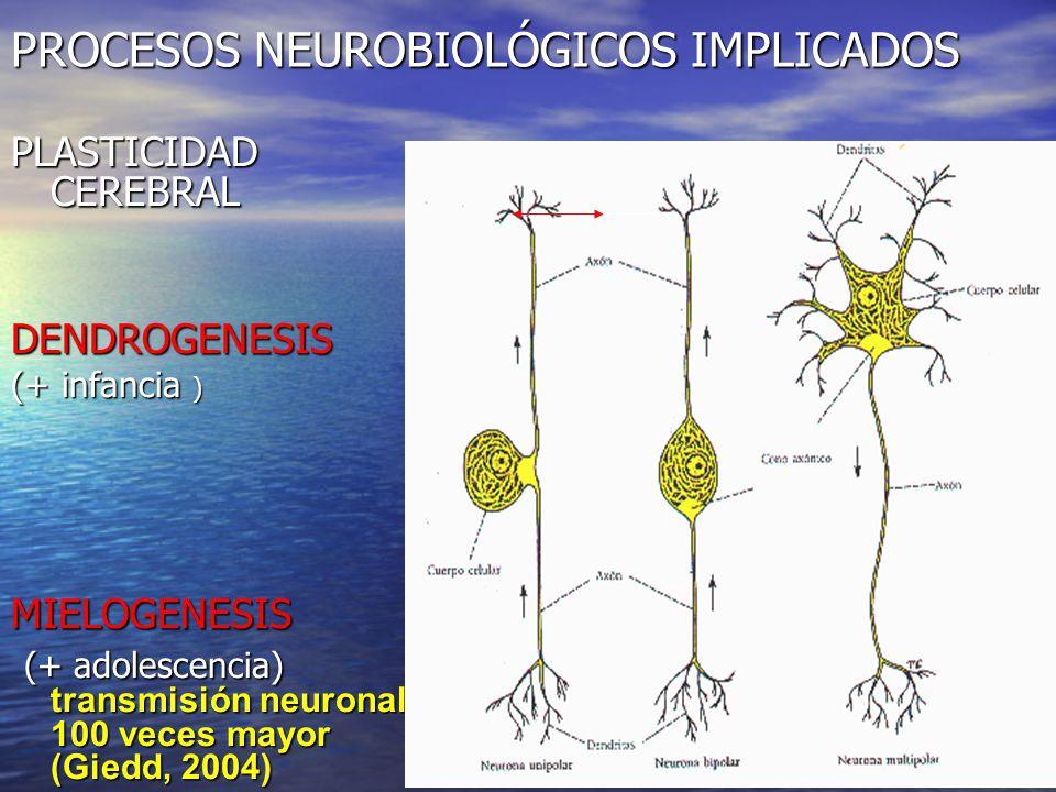 CORRELATO MAGNETOENCEFALOGRAFICO DE LA INTERVENCION PSICOLOGICA EN LA DISLEXIA (Top-Down)